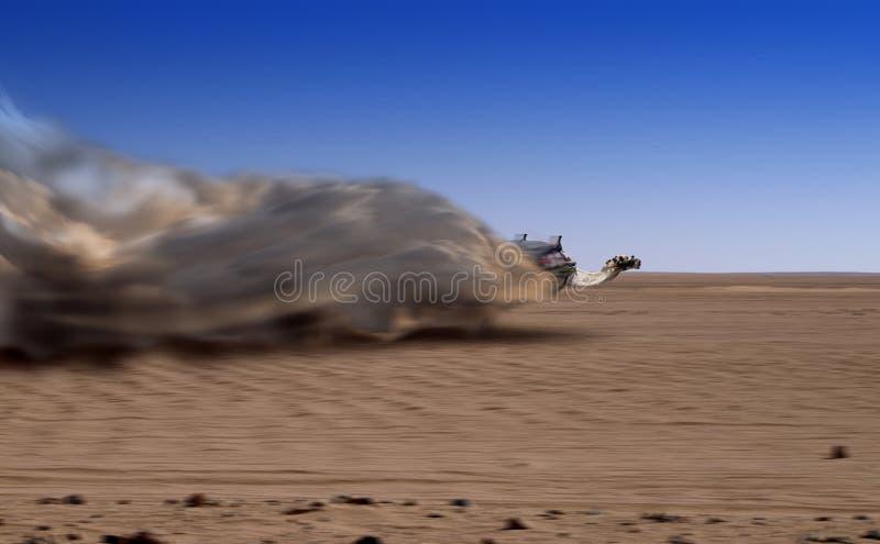 Speedy Camel Royalty Free Stock Photos