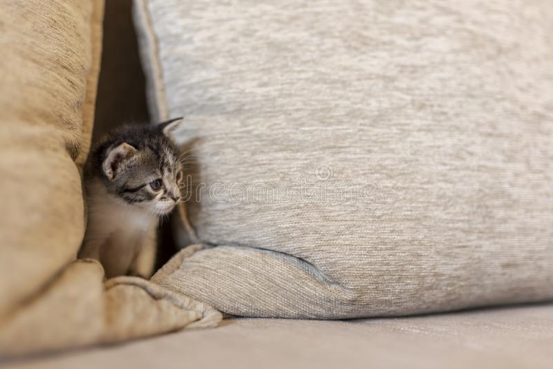 Speels katje op de bank stock afbeeldingen