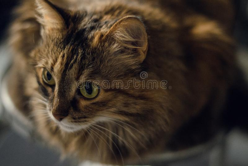 Speels kijk kat stock foto's