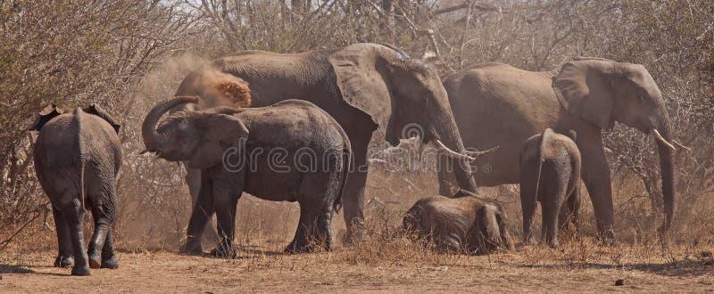 Speelse gelukkige Olifantsfamilie stock afbeeldingen