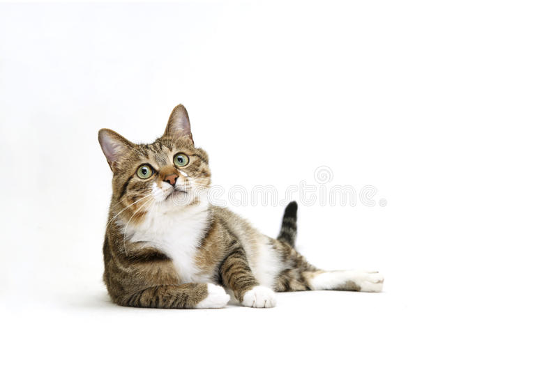 Speelse kat stock foto