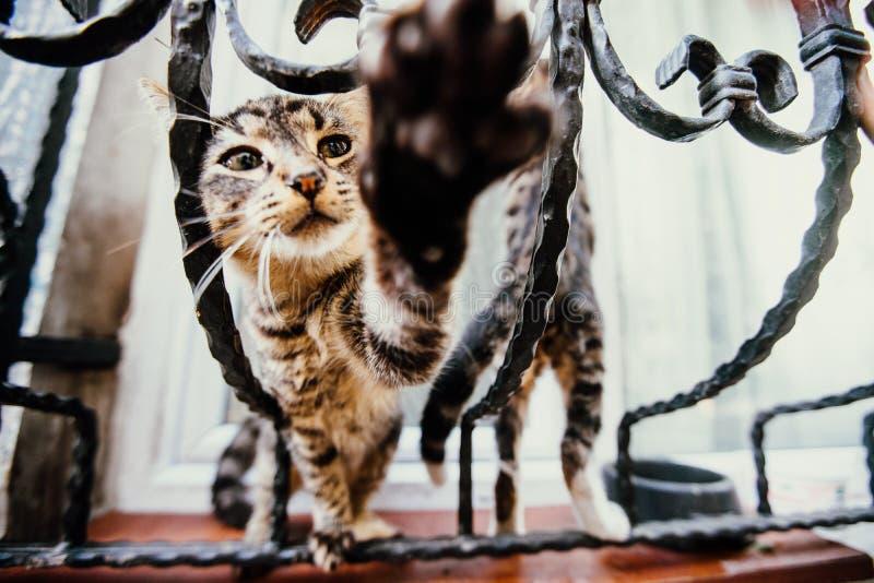 Speelse katten op mooie uitstekende ruiten royalty-vrije stock afbeeldingen