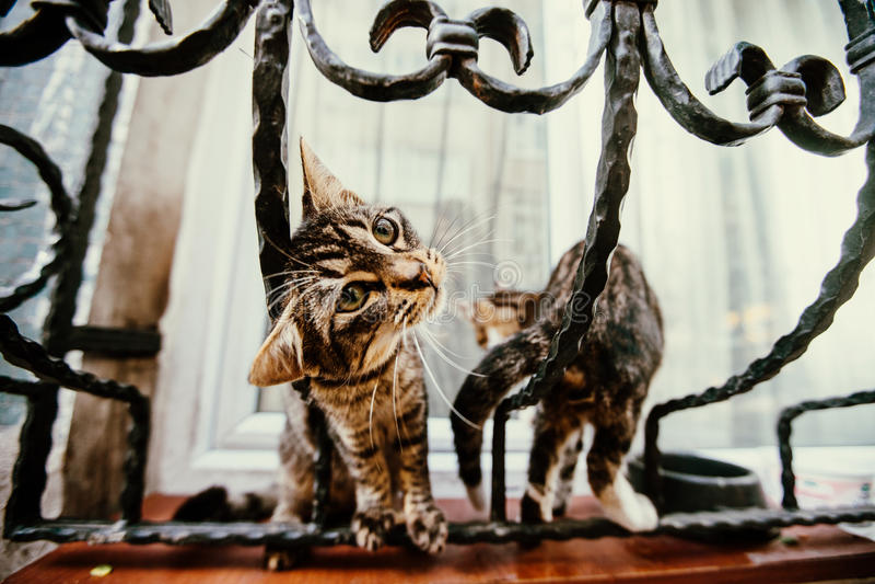 Speelse katten op mooie uitstekende ruiten stock foto