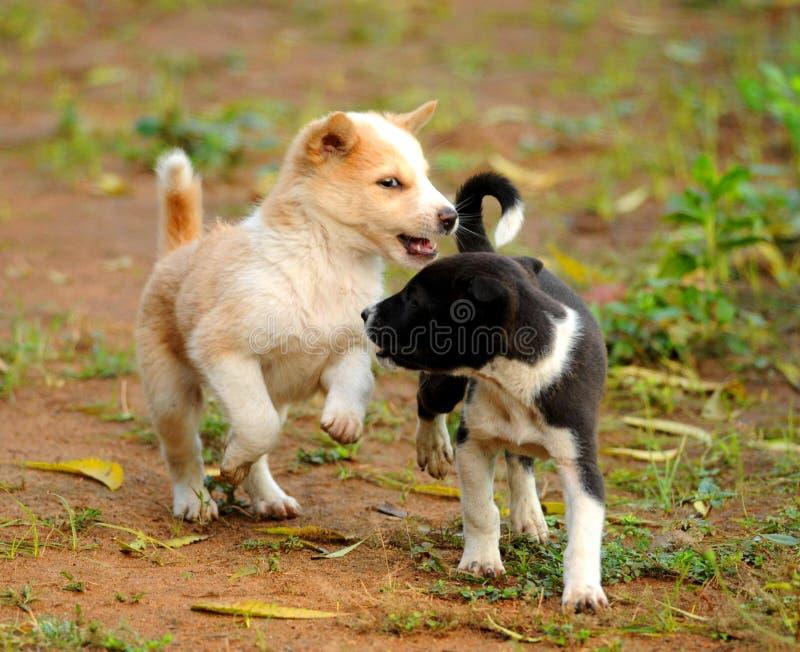 Speelse Puppy? royalty-vrije stock foto's