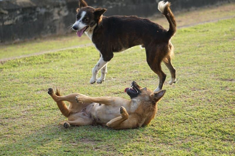Speelse Puppy stock fotografie