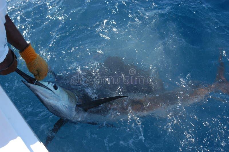 Speerfisch 2 stockfotos