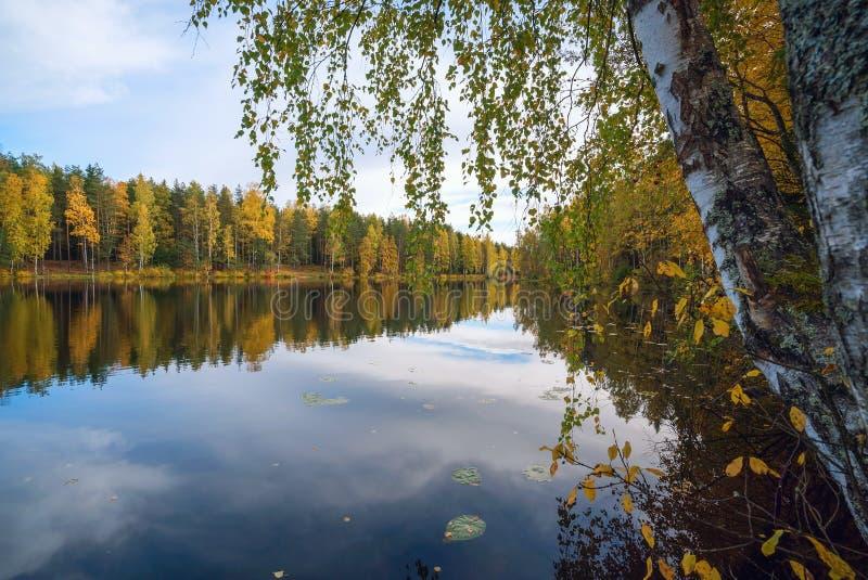 Spegelreflexion av träd och himmel i sjön Hösten landskap royaltyfria bilder