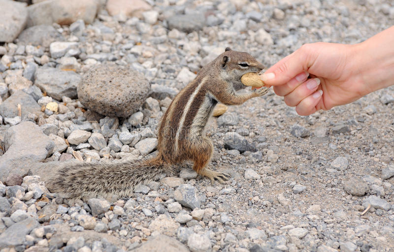 Speicherung eines netten Eichhörnchens stockfoto