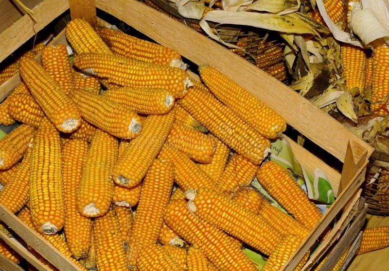 Speicherung von Mais in den hölzernen Kisten stockfoto