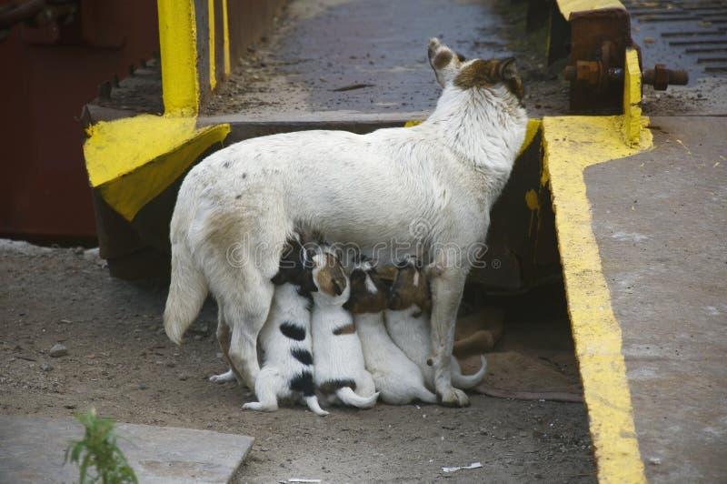Speisen Sie Ihren Welpenhund lizenzfreie stockbilder