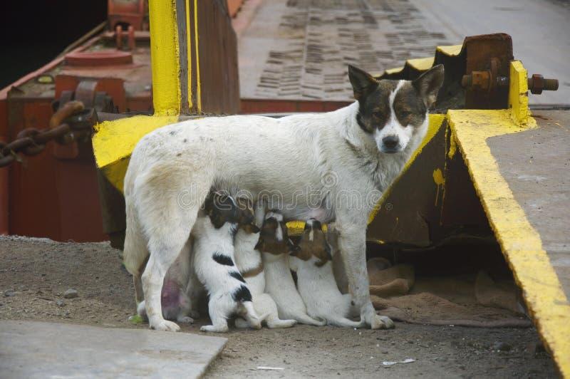 Speisen Sie Ihren Welpenhund stockbilder