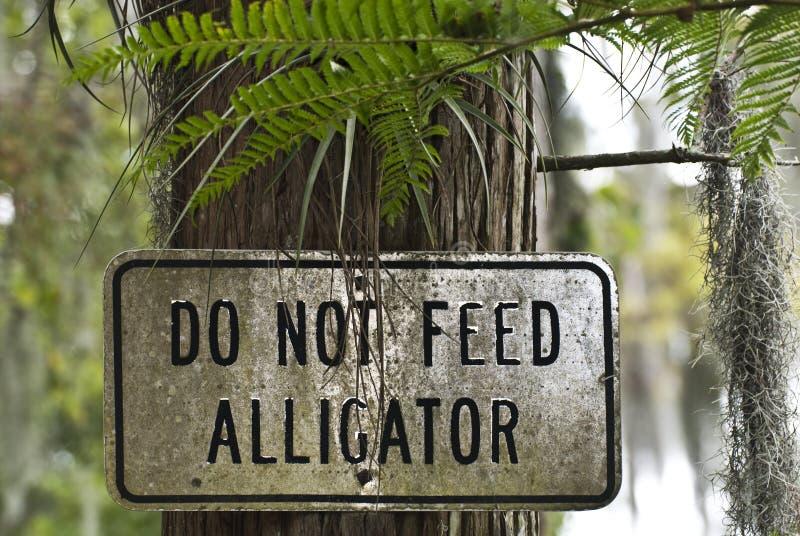 Speisen Sie nicht Aligators stockbild