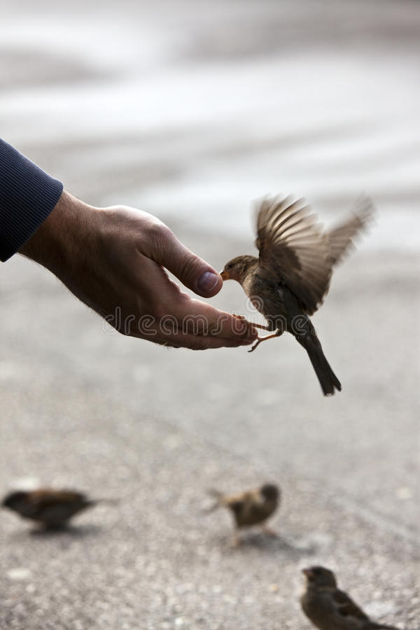 Speisenhand des Vogels lizenzfreies stockbild
