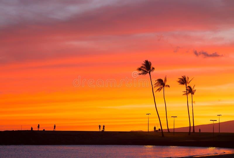 Spektakulär solnedgång på den tropiska Stillahavs- ön, Oahu, Hawaii royaltyfria foton