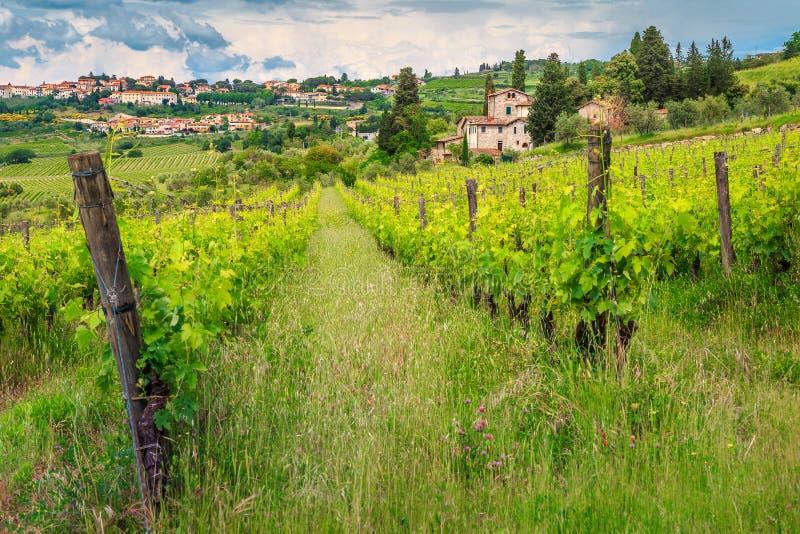Spektakulär vingård med stenhus, Chiantiregion, Tuscany, Italien, Europa arkivbild