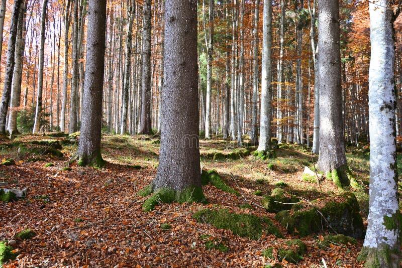 Spektakularni kolory jesień zdjęcie stock