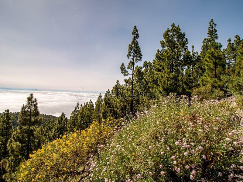 Spektakularny widok nad łąką góra obrazy stock