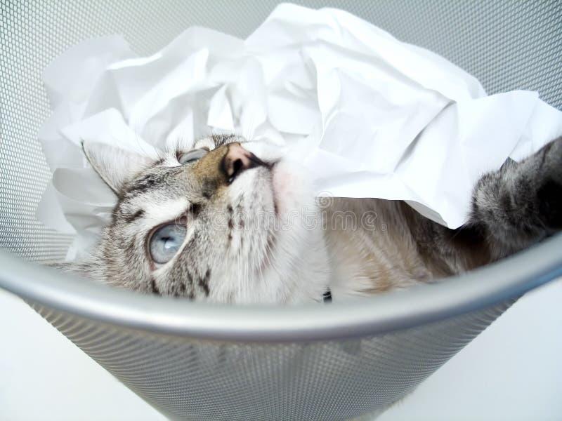 Download Spel 2 van de kat stock afbeelding. Afbeelding bestaande uit carnivoor - 30187