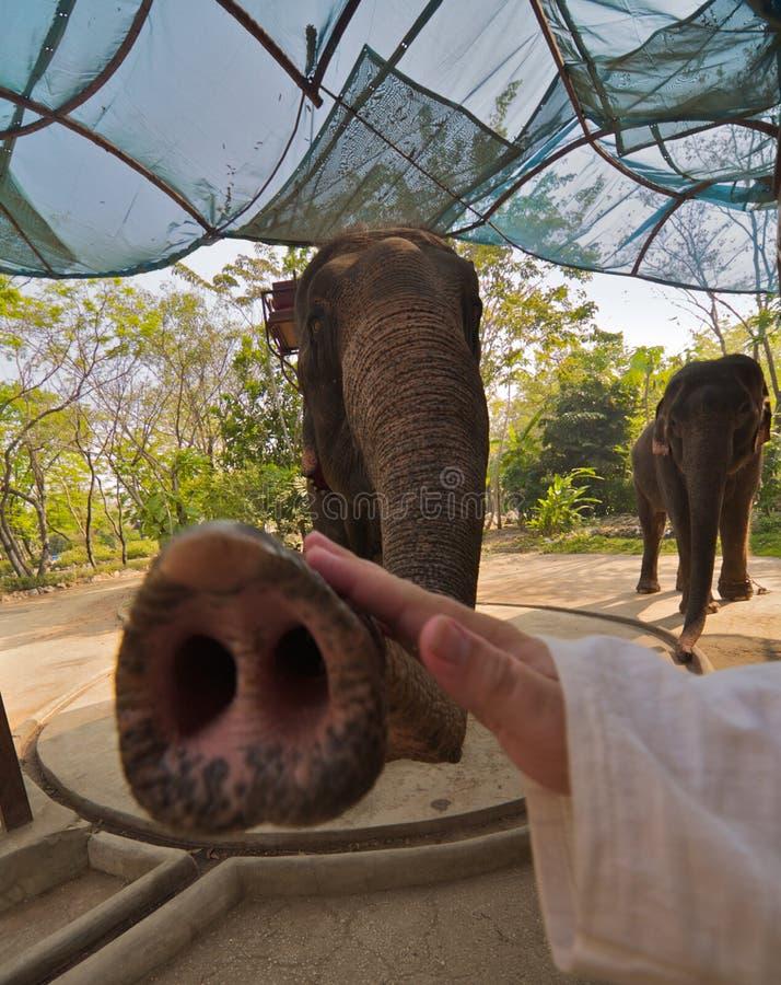 Spel met olifant royalty-vrije stock foto's