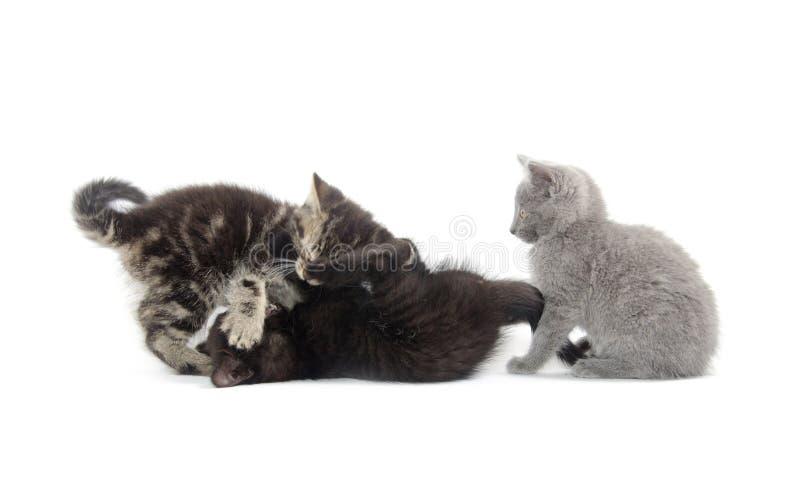 Spela för tre kattungar royaltyfria foton