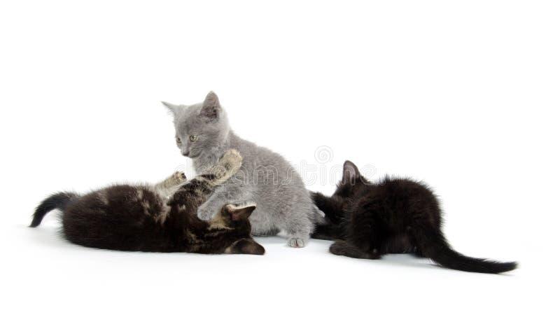 Spela för tre kattungar fotografering för bildbyråer