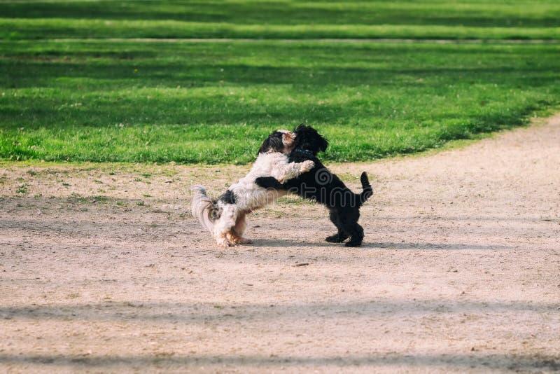 Spela för två gulligt hundkapplöpning arkivbilder