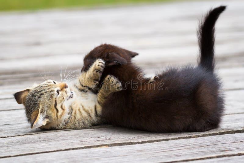 Spela för två litet kattungar arkivfoto