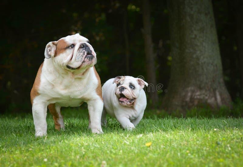 Spela för valp- och vuxen människahund royaltyfri fotografi