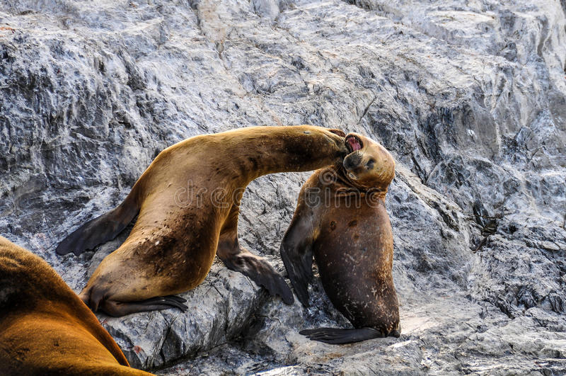 Spela skyddsremsor, beaglekanal, Ushuaia, Argentina royaltyfria bilder