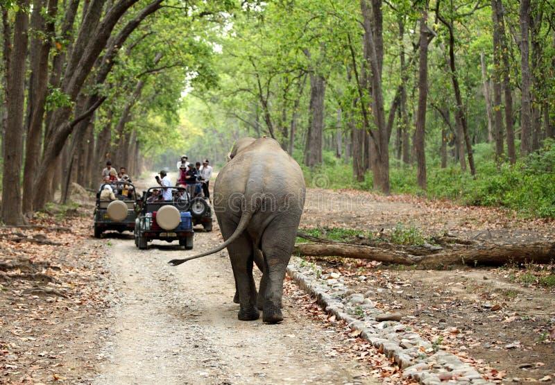 Spelaandrijving bij Dhikala-bos van Jim Corbett stock afbeelding