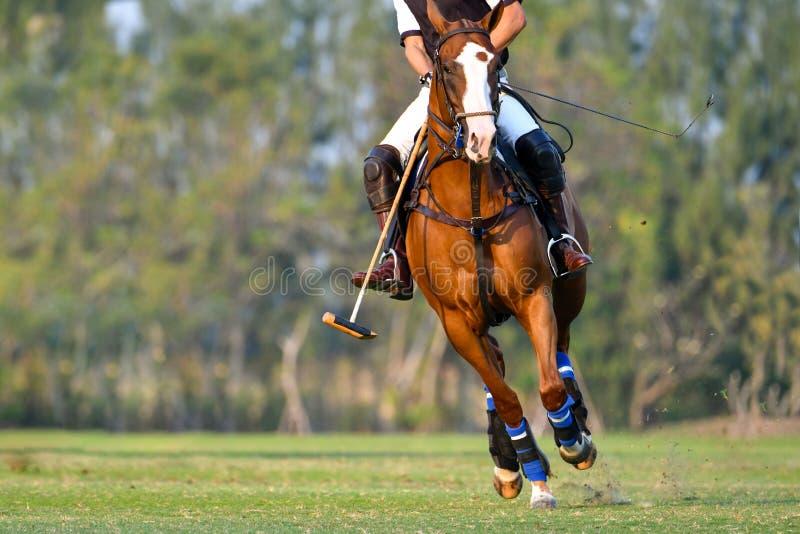 Spelaren och hästen i polon arkivfoton