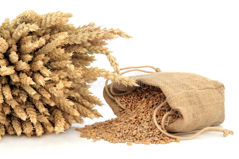 Spelt Wheat. In a bundle and hessian sack over white background stock photos