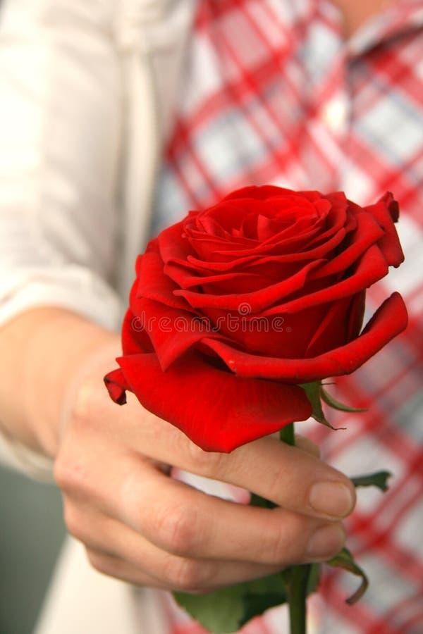 Spenden einer Rose lizenzfreie stockfotos
