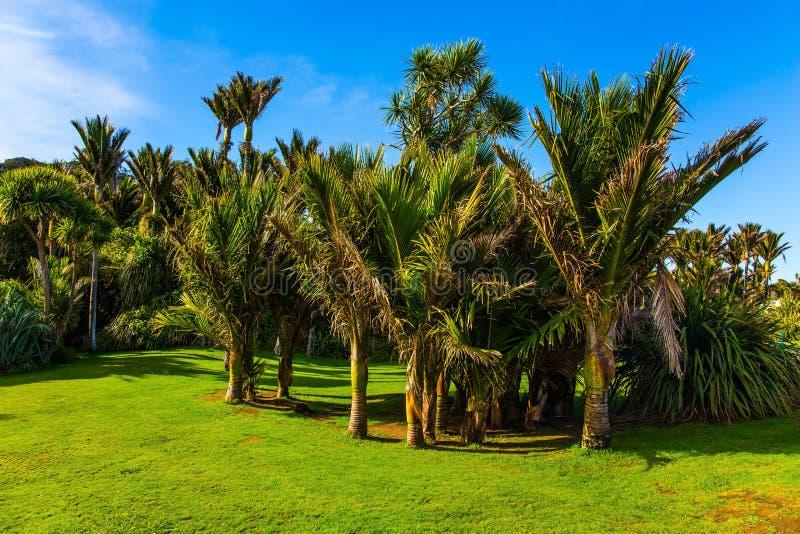 Spensliga palmträd arkivbild