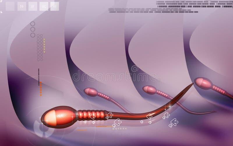 Sperm stock illustration
