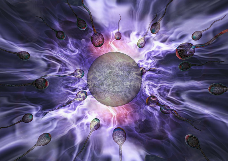 Sperm and egg. During reproduction stock illustration