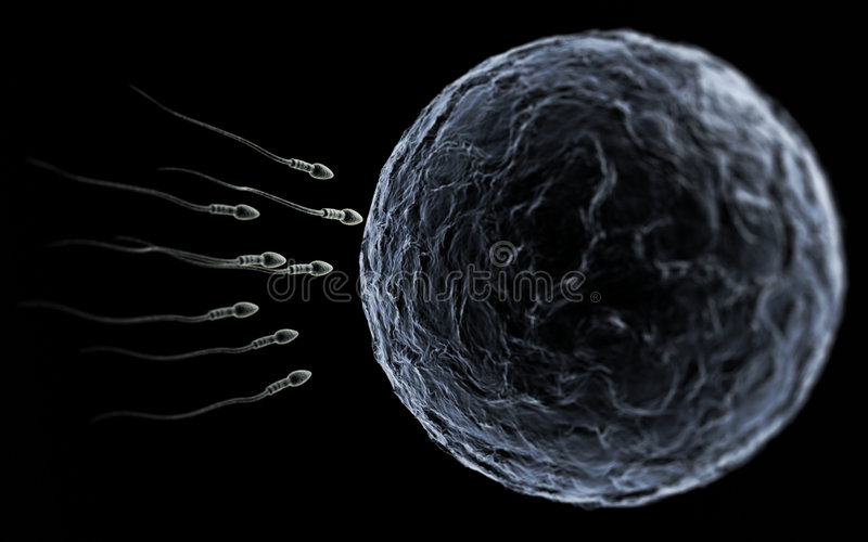 Sperm & Egg. Sperm swimming toward the egg at a microscopic zoom over black royalty free illustration