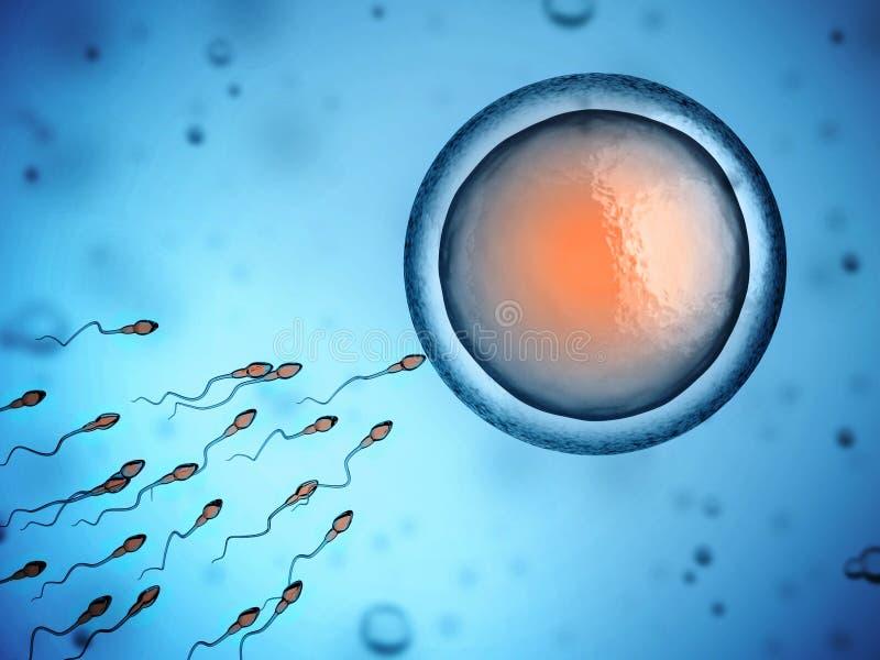 Sperm and egg cell. 3d illustration stock illustration