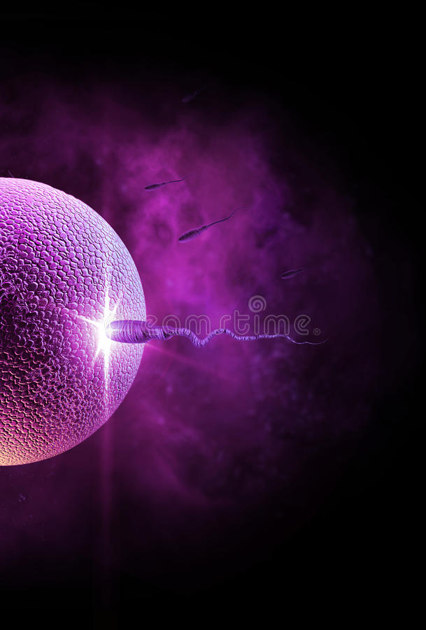 Sperm and Egg. Swimming sperm race to impregnate a fertile human egg royalty free stock photos