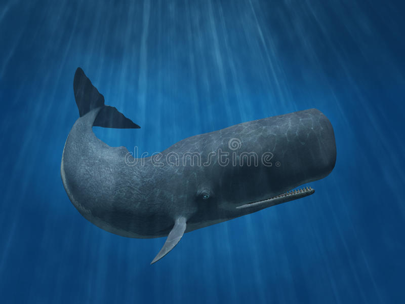 Sperm Whale. 3D render depicting a sperm whale undersea