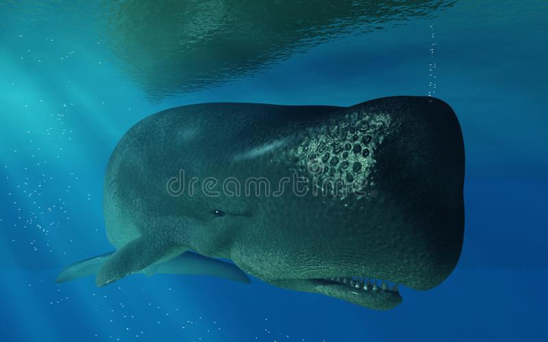 Sperm Whale Underwater. A gentle giant swims just below the surface of the deep blue sea. This ocean going mammal is a sperm whale. Sunlight breaks the surface vector illustration