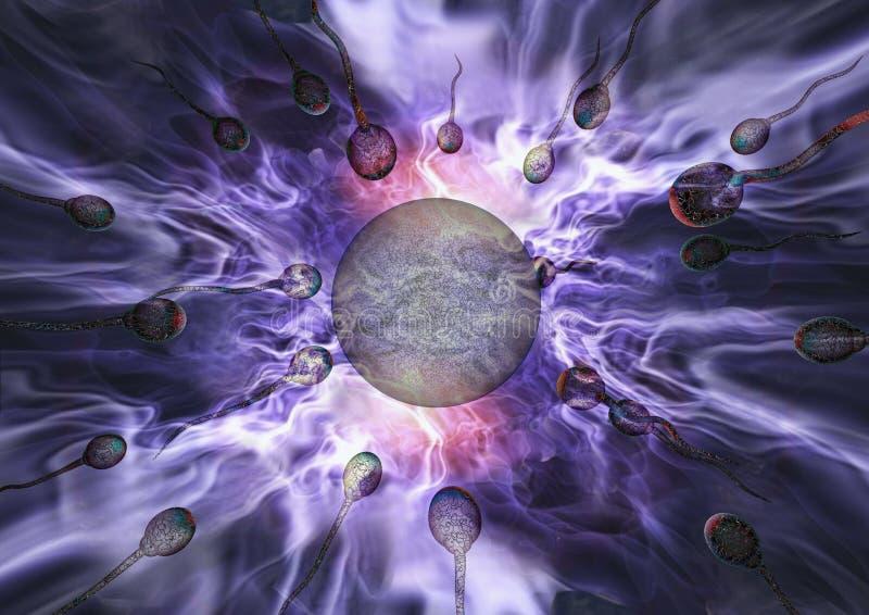 Sperma en ei stock illustratie