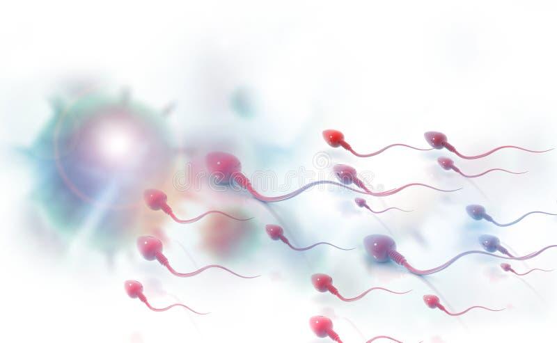 Sperma komórki ilustracji