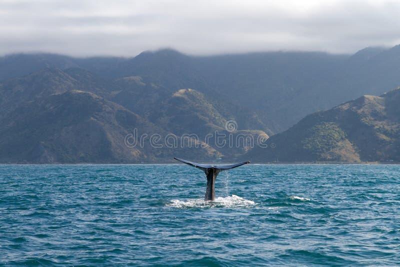 Sperma wieloryb fotografia stock