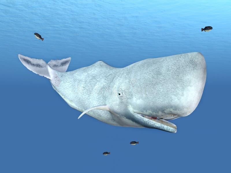 Sperma wieloryb ilustracji