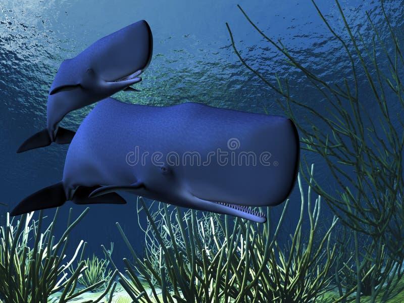 sperma wieloryby ilustracji