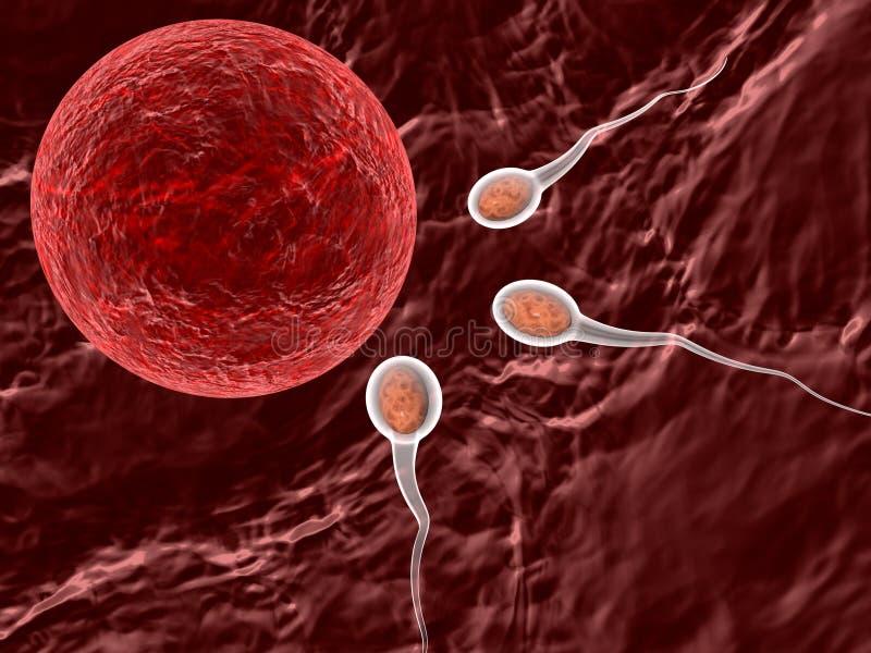 Spermatozoons, die aan eitje drijft stock illustratie