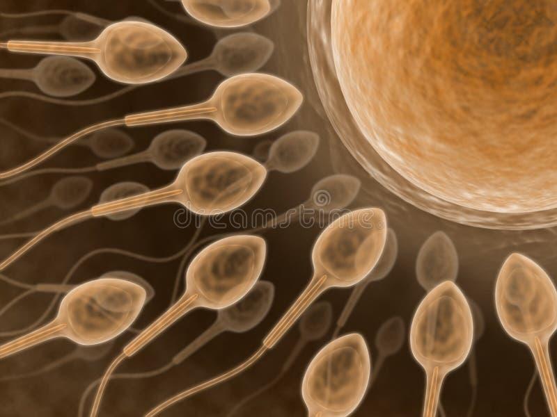 Sperme (hauts proches) illustration libre de droits