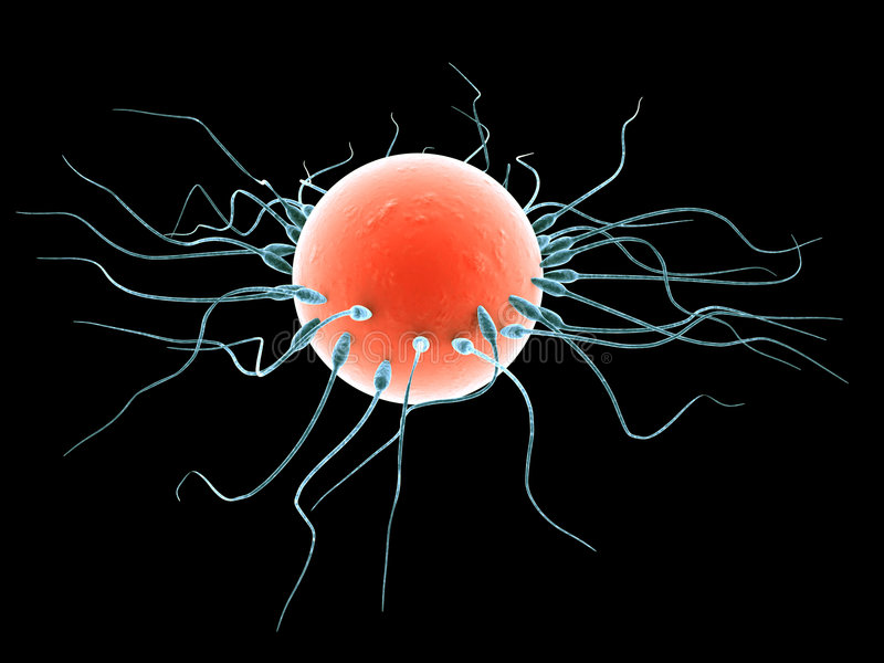 Download Sperms And Human Egg Royalty Free Stock Image - Image: 1194196
