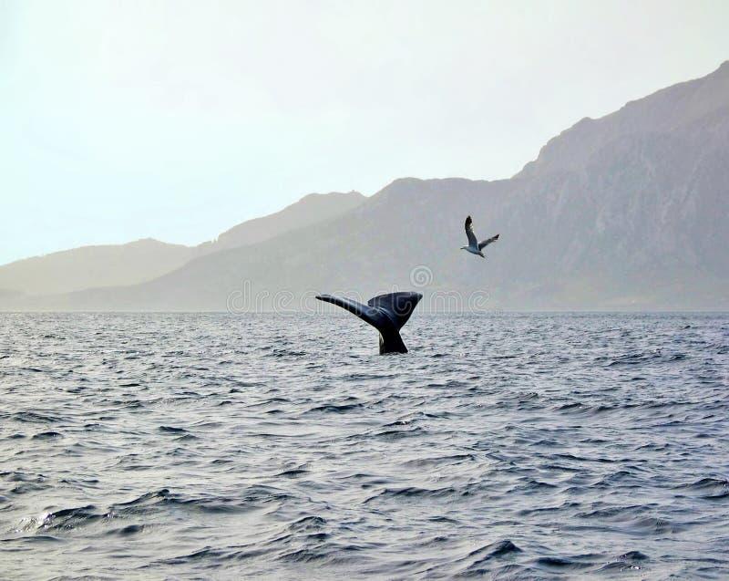 spermwhale royaltyfria foton